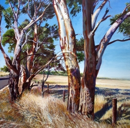 """Aged Red Gums Ashbourne Road. Acrylic on canvas. """"Sold""""."""