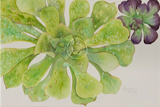 "Succulents. Watercolour. 380 mm x 570 mm. ""Unsold""."