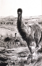 "Teenage emu at Hucks Point. Charcoal. ""Sold""."