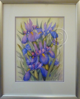 "Winter Iris. Watercolour. ""Unsold""."