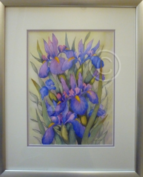 "Winter Iris. Watercolour. ""Unsold""."