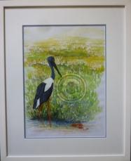 Jabiru Framed watercolour 45 cm x 55 cm