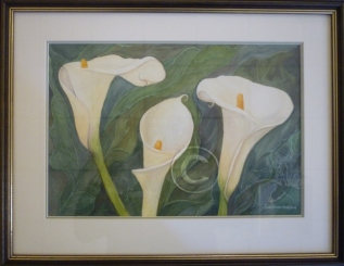 Arrum lilies watercolour 500 mm x 400 mm
