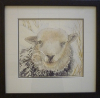 Herwick sheep watercolour 370 mm x 360 mm