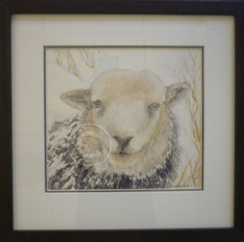 Herwick sheep watercolour 370 mm x 360 mm
