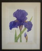 Purple iris watercolour 460 mm x 560 mm