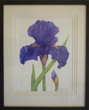 Purple iris watercolour 460 mm x 560 mm