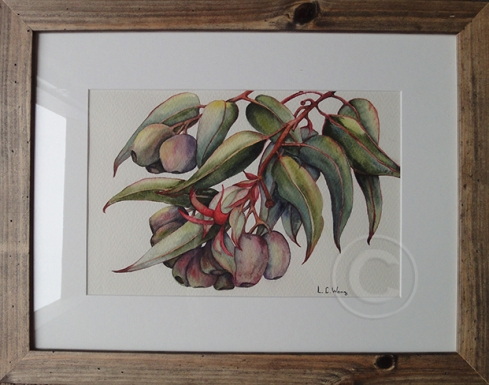 Gum Nuts 'Watercolour' 360 x 460, Framed 'unsold'