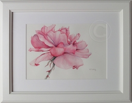 The Rose 'Watercolour' 480 x 380, Framed 'Unsold'