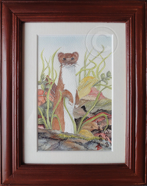 The Stoat 'Watercolour' 195 x 245, Framed 'Ártists' Collection'