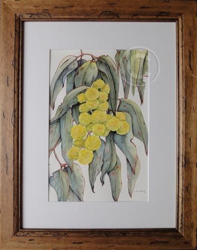 Winter Wattles 'Watercolour' 475 x 375, Framed 'Unsold'