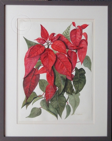 "Poinsettia 'Watercolour' 52 cm x 27.5 cm, Framed, ""Unsold'"