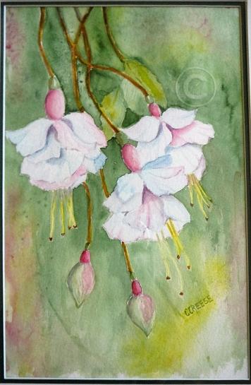 Fuschias. Watercolour, framed, 360 x 270 mm