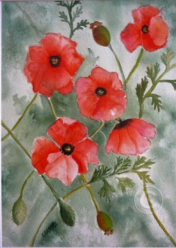 Poppies. Watercolour, framed, 490 x 400 mm
